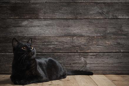 Dieta dla kota - jakich zasad powinniśmy przestrzegać?