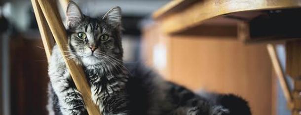 Dlaczego kot gryzie opiekuna?