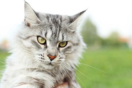 Dobra karma dla kota – to znaczy jaka?