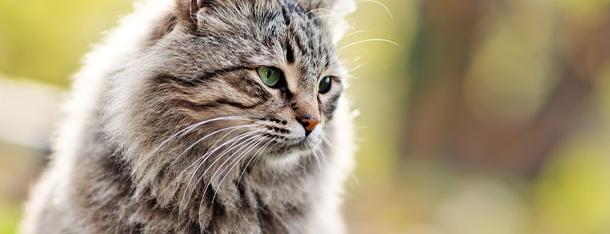 Dobra mokra karma dla kota - czym powinna się charakteryzować?