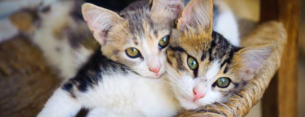 Drugi kot w domu – co należy wiedzieć?