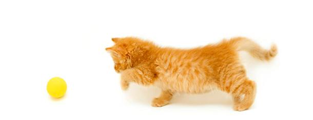 Gry dla kotów – czy aplikacje dla kotów to dobry pomysł?