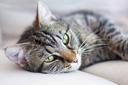 Jak karmić kota, aby był szczęśliwy i pełny energii?