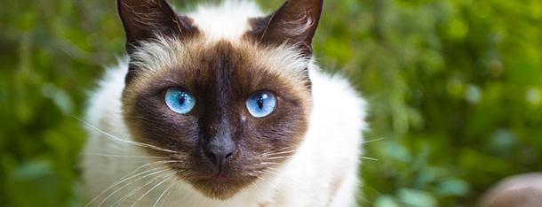 Jak oswoić kota? Porady dla nowych opiekunów
