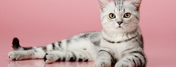 Jak podać kotu tabletkę? Porady dla opiekunów