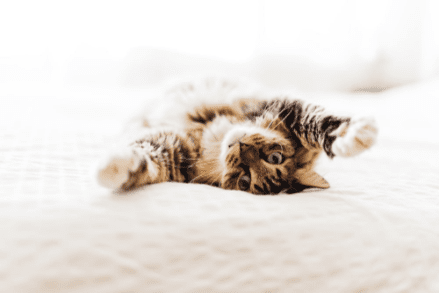 Jaka karma dla kota sprawdzi się najlepiej dla Twojego mruczka?