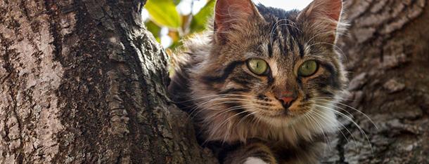 Jedzenie dla kota – co podawać naszemu pupilowi?