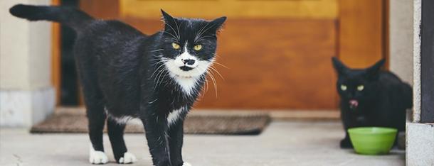 Karma mokra dla kota - główne danie czy przekąska?