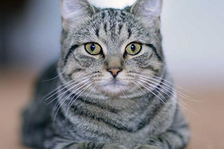 Karmienie małego kota - sprawdzone porady, jak napełnić jego mały brzuszek