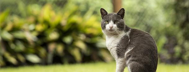 Kot czy kotka – czy płeć u kota ma znaczenie?