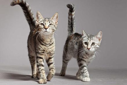 Kot nie chce jeść mokrej karmy - czy to powód do niepokoju?