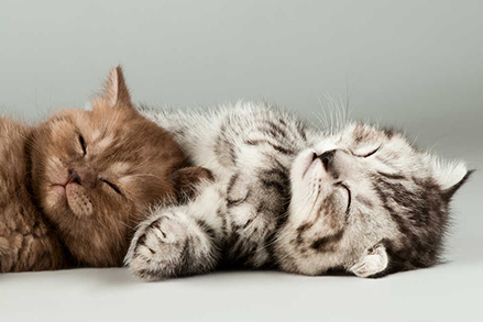 Kot nie chce jeść suchej karmy? Czy to powód do zmartwień?