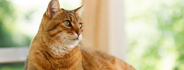 Kot w domu – jak zaopiekować się kotem domowym?