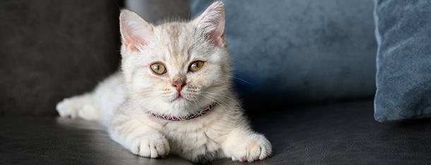 Kot w nowym domu - jak długo trwa proces aklimatyzacji?