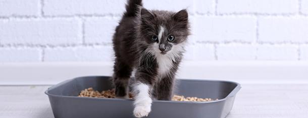 Kot załatwia się poza kuwetą – o czym to może świadczyć?