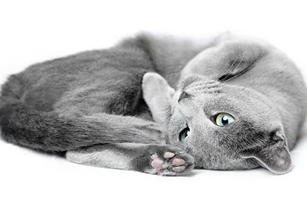 Kot zakopuje jedzenie - co to oznacza?