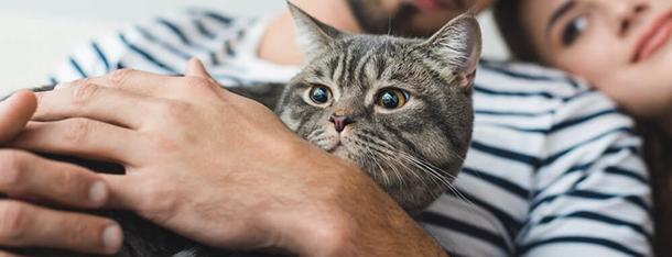 Czipowanie kota - na czym polega i ile kosztuje?