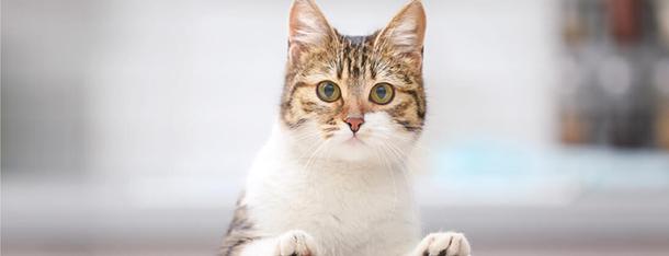 Dlaczego kot boi się ogórka - czy istnieje logiczne wytłumaczenie?