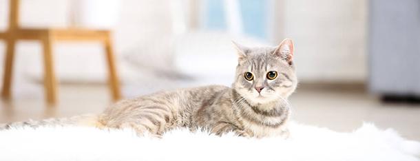 Ile razy dziennie karmić małego kota? Sprawdź!
