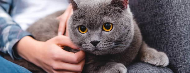 Jak głaskać kota, aby sprawić mu przyjemność?