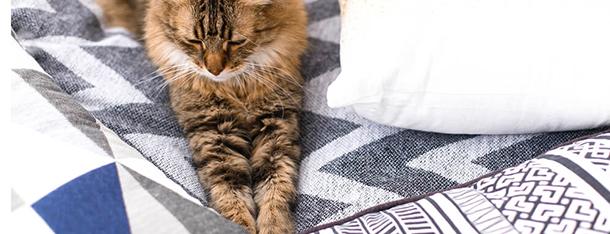 Kot miauczy w nocy – jakie mogą być przyczyny?