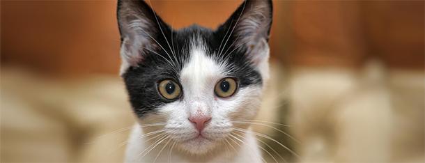 Wystraszony kot – jak go uspokoić?