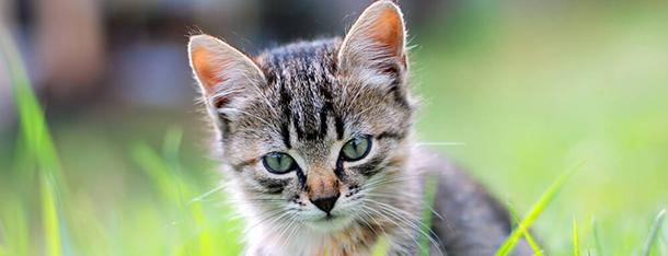 Mały kot w domu – jak pomóc maleństwu przyzwyczaić się do nowego miejsca?
