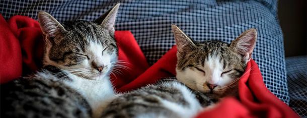 Mleko dla kota - czy nasz mruczek może pić mleko?