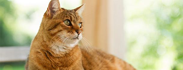 Najlepsza karma dla kota - co podawać naszemu podopiecznemu?