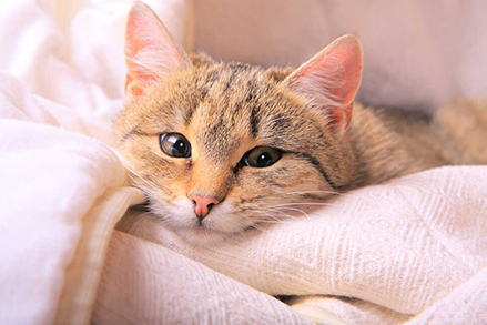 Najlepsza mokra karma dla kota – jak czytać opakowania?