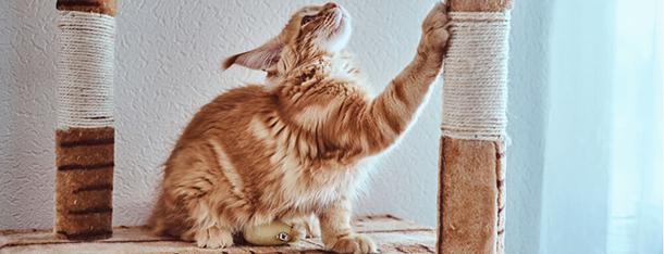 Obcinanie pazurów u kota -– jak zrobić to dobrze?