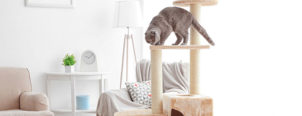 Otyły kot – jak pomóc naszemu pupilowi zrzucić zbędne kilogramy?