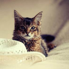 Pokarm dla kota - budowanie relacji, czy zaspokajanie potrzeb?