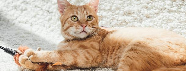 Przekąski dla kota - czym częstować kota między posiłkami?