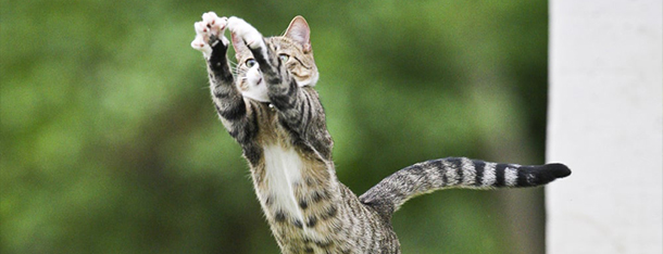 Sprawdzone porady jak odchudzić kota