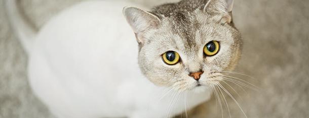 Strzyżenie kota – czy mruczki należy strzyc?