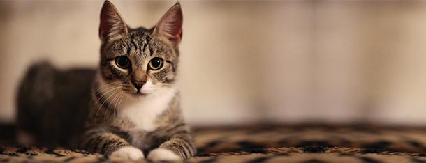 Suchy nos u kota – symptom choroby?