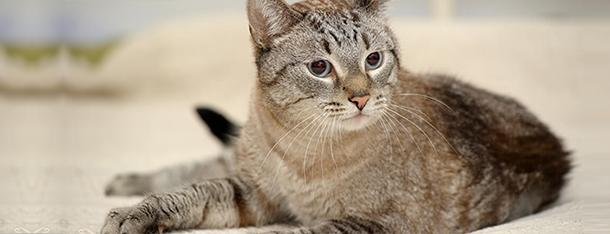 Syczenie kota – o czym świadczy?