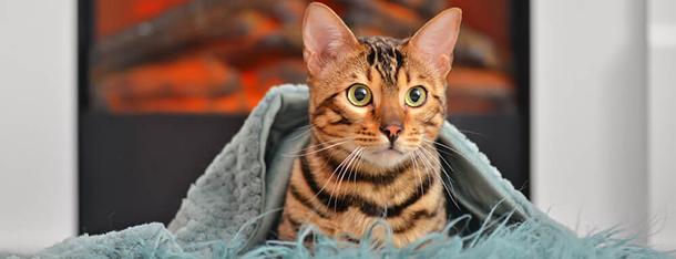 Waleriana dla kota – czy podawać ją mruczkowi?