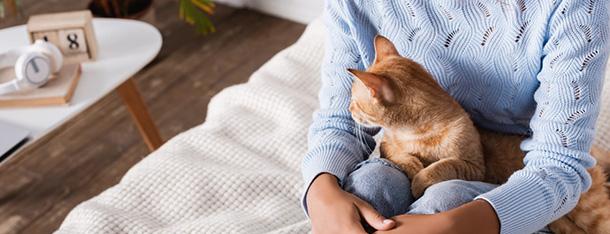 Wątróbka dla kota – podawać, czy unikać?