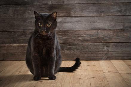 Woda dla kota - czy kot może pić wodę? Jaki rodzaj podawać naszemu mruczkowi?