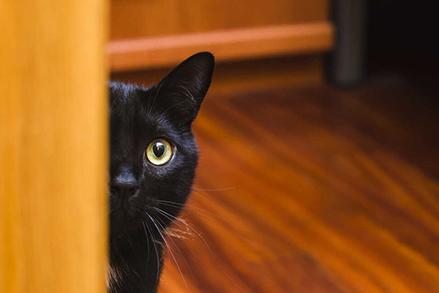 Wołowina dla kota - rarytas? Czy podstawa żywienia?