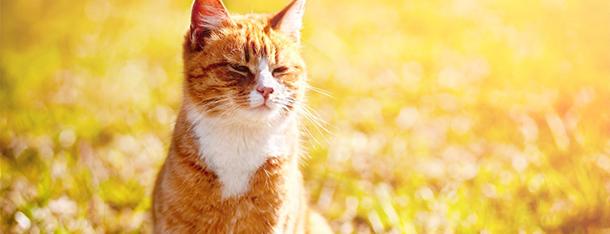 Żywienie kota pierwszym krokiem do zawiązania przyjaźni