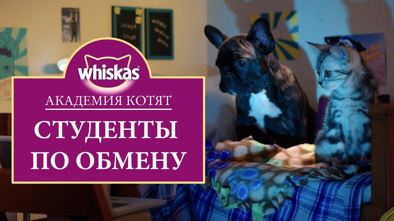 Эпизод 4. Как подружить котенка с собакой или кошкой. Обучение по обмену: Академия котят