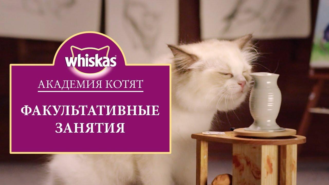 Эпизод 5: Как играть с котенком правильно. Как развивать котенка. Академия котят (0+)