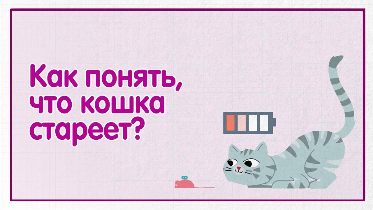 Как понять, что кошка стареет? — WHISKAS® К.Т.У.
