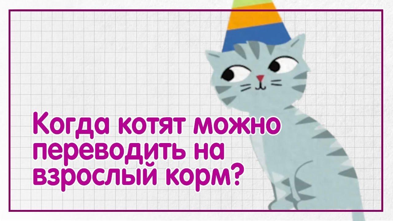 Когда котят можно переводить на взрослый корм? — WHISKAS® К.Т.У.