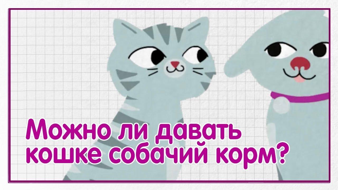 Можно ли давать кошке собачий корм? — WHISKAS® К.Т.У.