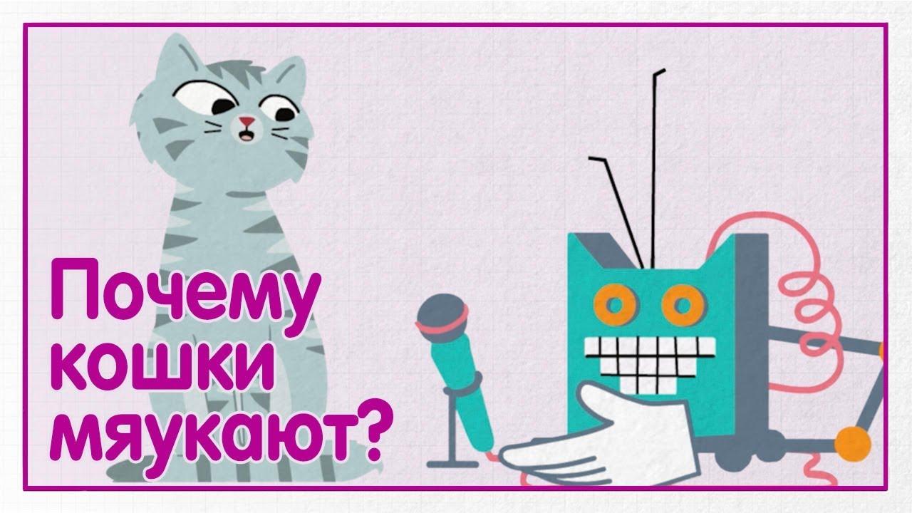 Почему кошки мяукают? — WHISKAS® К.Т.У.