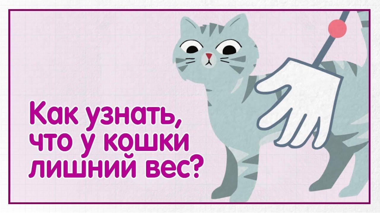 Как узнать, что у кошки лишний вес? — WHISKAS® К.Т.У.